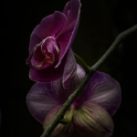 Orchids - MKE Domes2 (1 of 1)