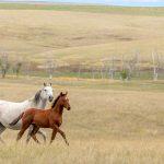 Mark Nelson Ranch